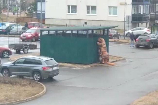 Житель Ленобласти вынес мусор в костюме динозавра и стал звездой соцсетей