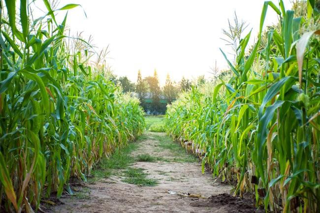 """Земли """"молчаливых дольщиков"""" могут причислить к бесхозяйному имуществу"""