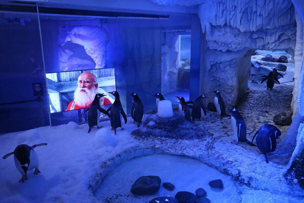 Gute Laune trotz Lockdown: Pinguine in London schauen Weihnachtsfilme