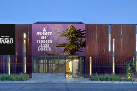Just What Exactly is the Museum of Weed Anyway?