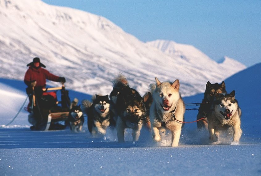 Sled dogs have ancient roots