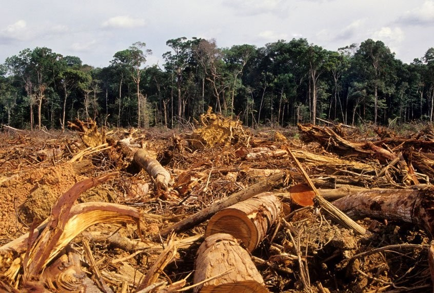 How deforestation helps deadly viruses jump from animals to humans