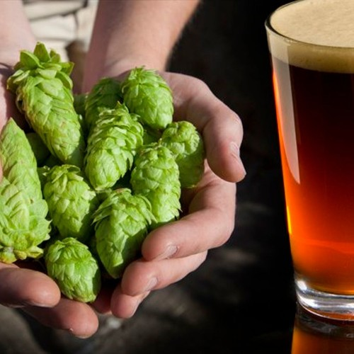 Mad hops: The rise of farm-to-bottle brewing is a great thing for beer enthusiasts and the environment