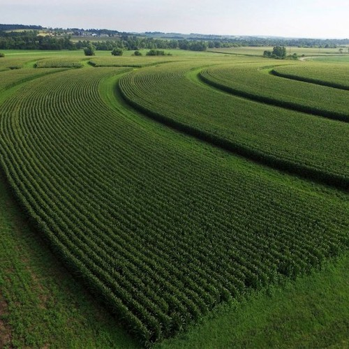 Planting native prairie could be a secret weapon for farmers