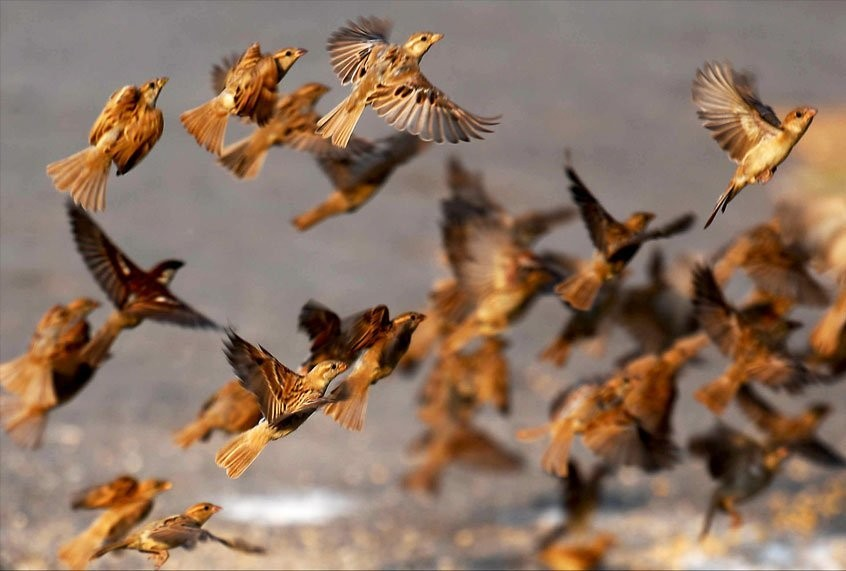 Massive numbers of birds are dying in New Mexico and no one knows why