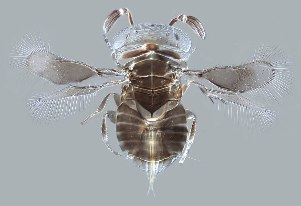 Wasp venom can save lives. But the supply chain is shaky