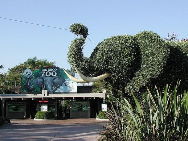 Where to Eat Near the San Diego Zoo