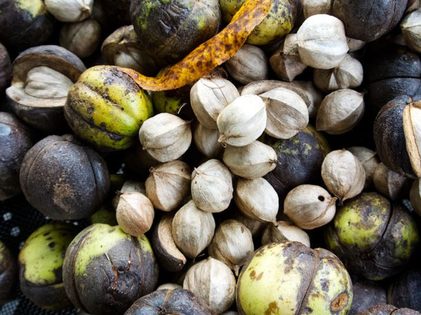 Foraged Flavor: Wild Hickory Nuts