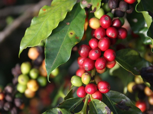 What Does 'Single Origin' Coffee Really Mean?