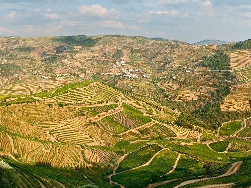 A Beginner's Guide to Portuguese Wine