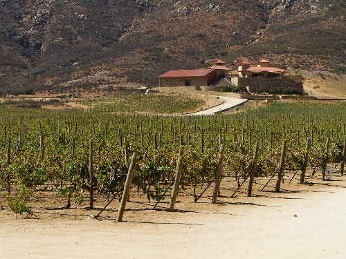 Where to Eat in Mexico's Valle de Guadalupe