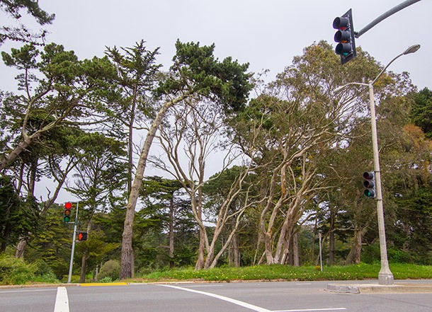 Where to Eat Near Golden Gate Park in San Francisco