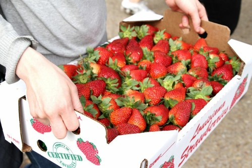 Baking Guides: How to Select, Freeze, and Bake with Strawberries