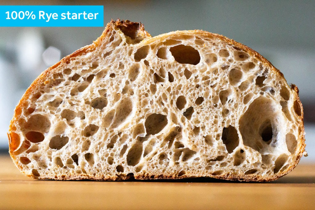 The Best Flour for Sourdough Starters: An Investigation