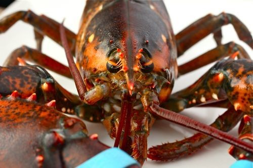 The Food Lab: How To Buy A Lobster