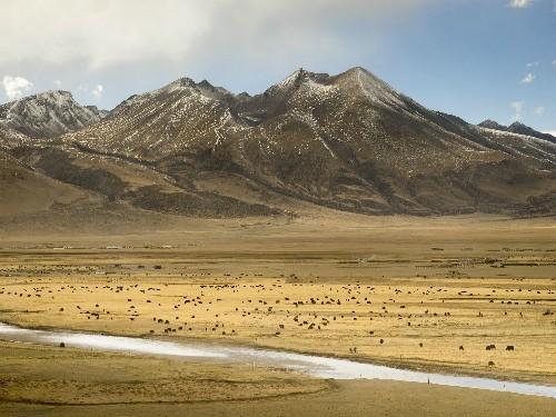 Butter Tea, Yak Jerky, and Momos Galore: An Introduction to Tibetan Cuisine