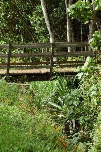 Hanalei by moonshine: Hiking the 'Okolehao Trail