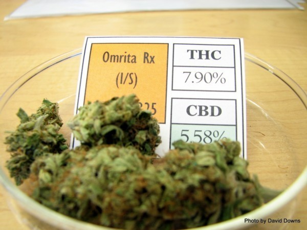 Three out of four doctors recommend marijuana in New England Journal of Medicine poll
