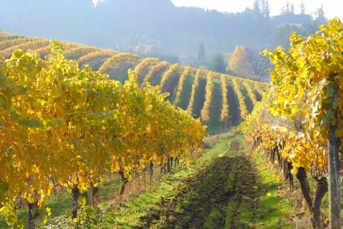 Judy Jordan, former owner of J Vineyards & Winery, purchases Oregon's Chehalem Mountain Vineyard - Inside Scoop SF