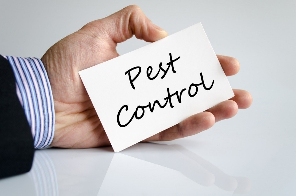 7 Key Tips for Finding the Best Pest Control Company