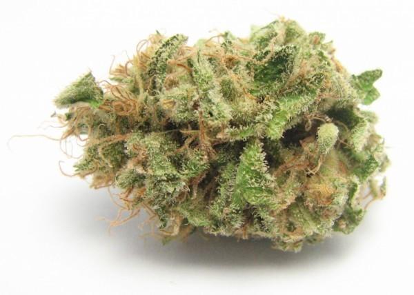 10 best marijuana strains for 4/20