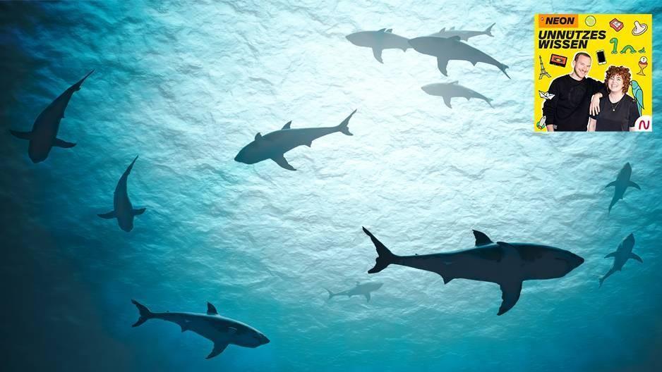 Der Mensch fischt jährlich etwa 100 Millionen Haie – so groß ist das Problem des Haisterbens wirklich
