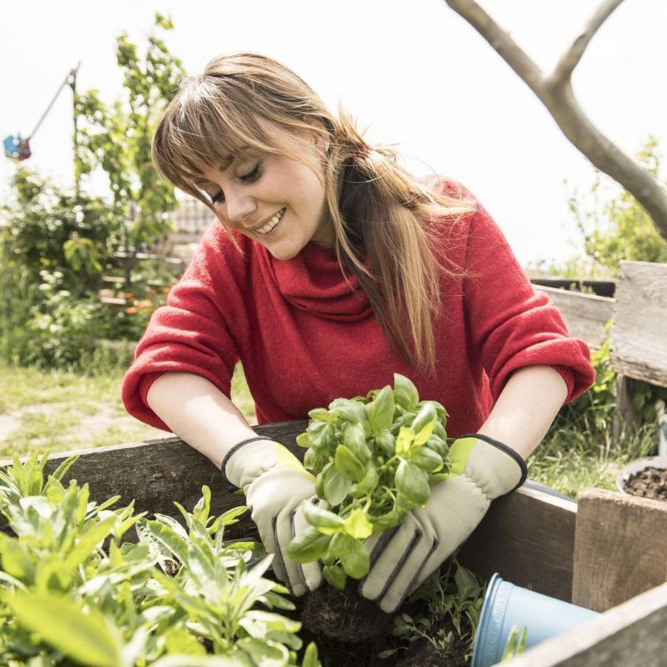 Hochbeet bepflanzen: Paradies für junges Gemüse