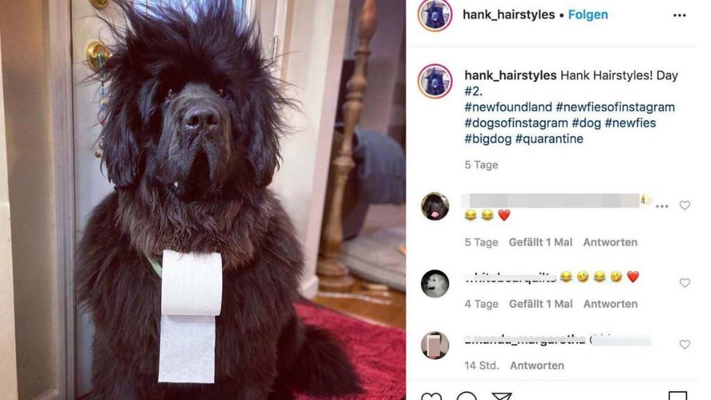 Frau hängt ihrem Hund Klopapier um – Tage später ist er eine Stilikone und begeistert Hunderte