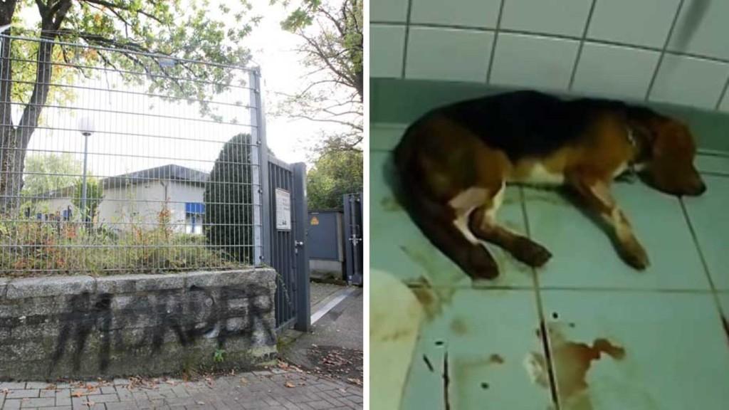 Behörden schließen zwei Labore – in einem dritten gehen die Tierversuche weiter. Warum?