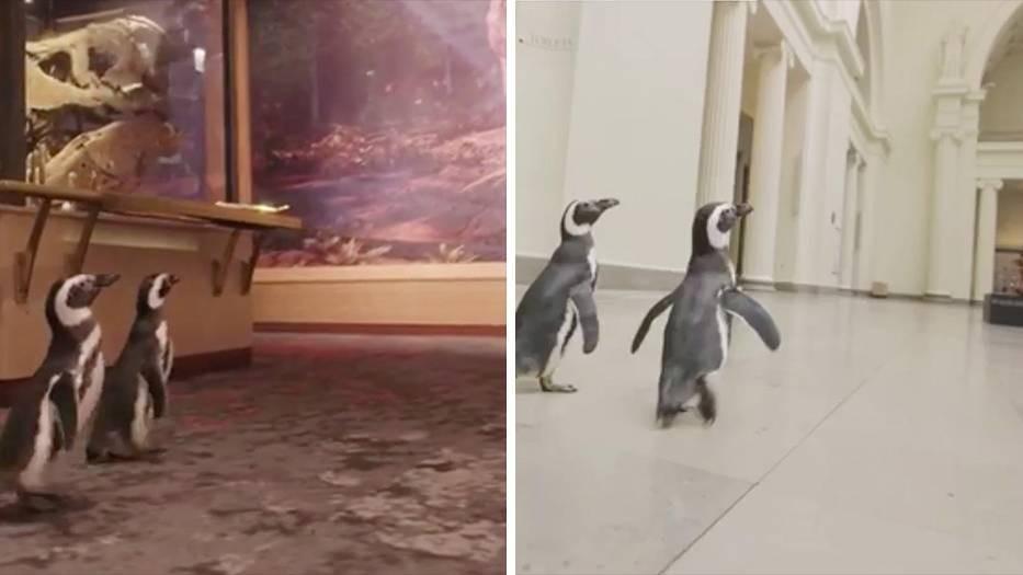 """""""Shedd Aquarium"""" in Chicago: Pinguine besuchen die Dinosaurier im Museum"""