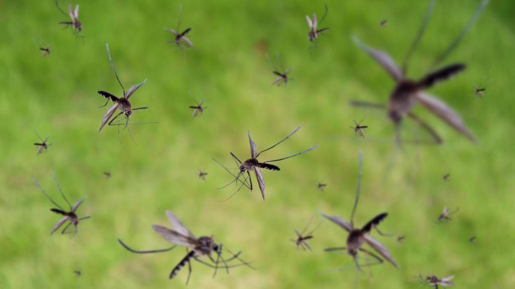 Mann soll mit seinen Flatulenzen Mücken töten können und sein Dorf frei von Malaria halten