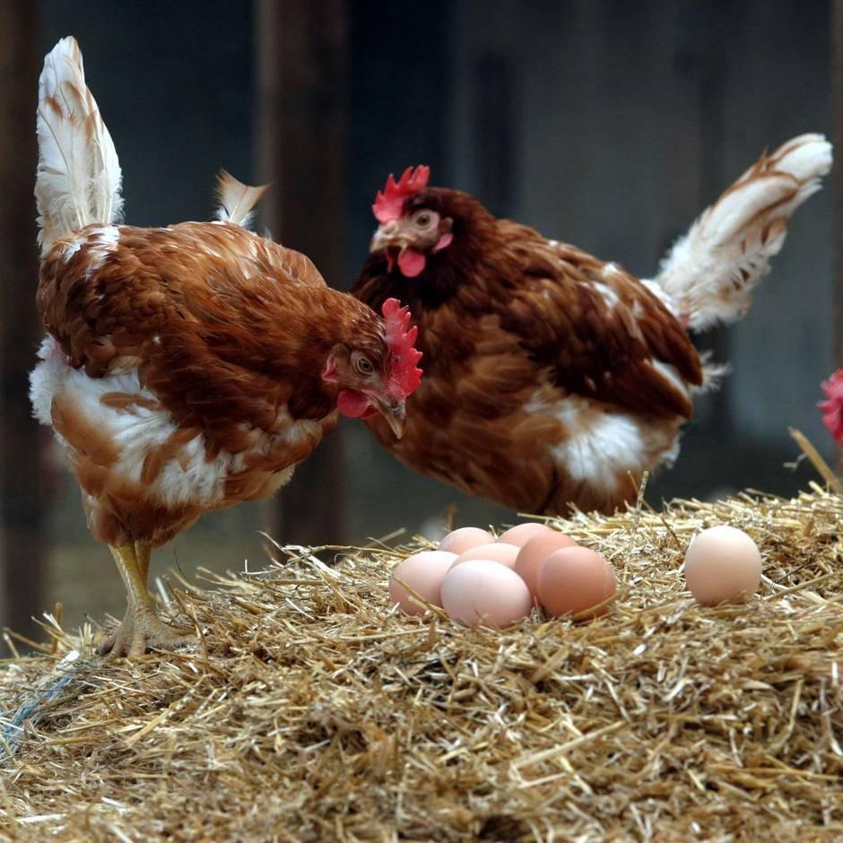 Veganer, die Eier essen: Ist Vegganismus inkonsequent oder gesund?