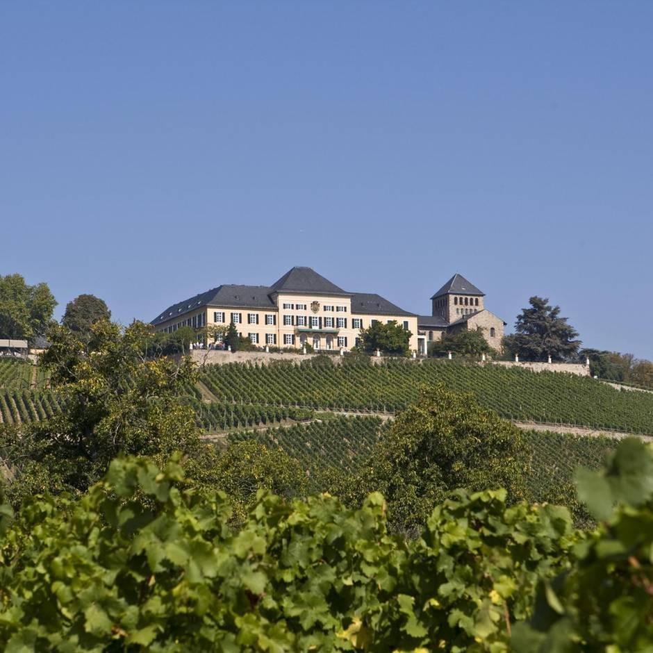 Die Top 10 der besten Weingüter der Welt – für Besucher