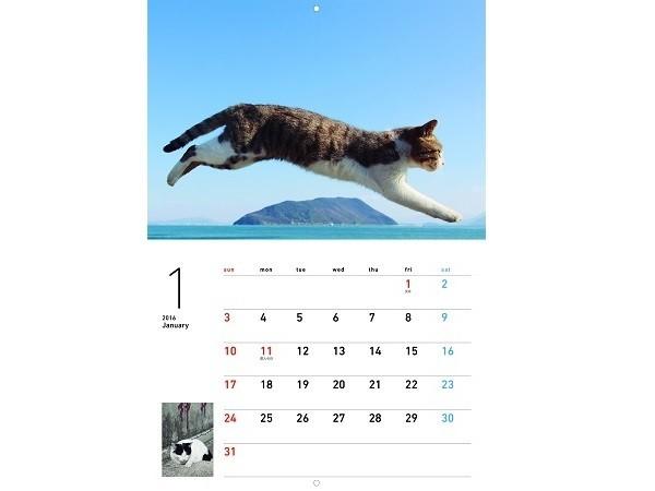 365日ずっと一緒!大ヒット写真集「飛び猫」と「フクとマリモ」がカレンダーに! - STRAIGHT PRESS[ストレートプレス]
