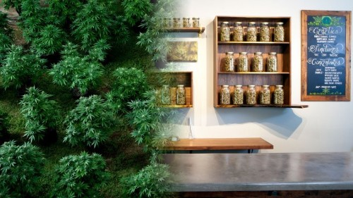 Confident Cannabis is the stock exchange of weed