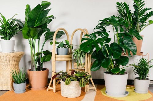 Bloomscape raises $7.5M to sell you plants of all sizes – TechCrunch