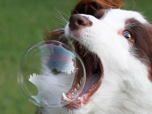 Week in Review: Pet startups will be the death of Silicon Valley