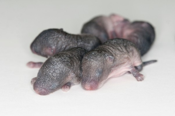 Scientists 3D-printed ovaries and made mouse babies