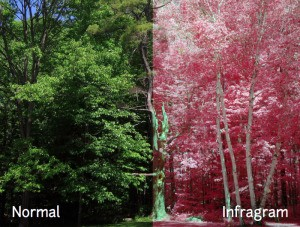 Public Lab's Crowdfunded Infragram Cameras Let People See Plants In A Different Light