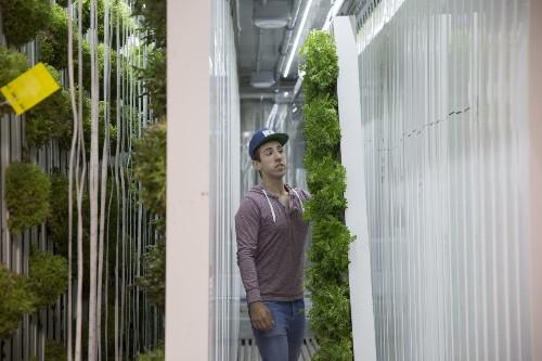 Urban farming incubator Square Roots raises $5.4M