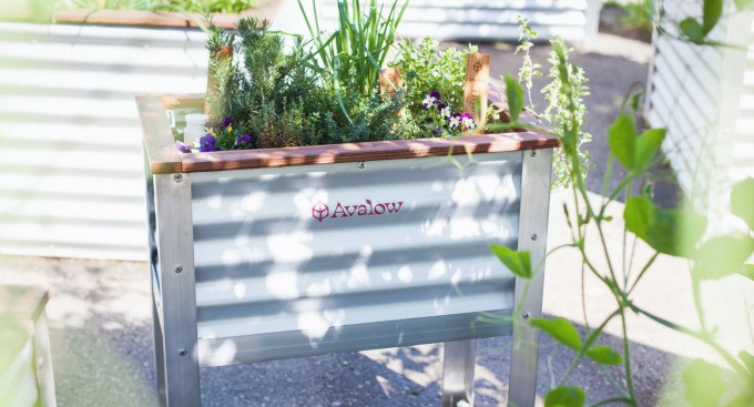 Avalow wants to be your gardening coach