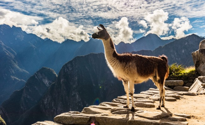 Winamp returns in 2019 to whip the llama's ass harder than ever
