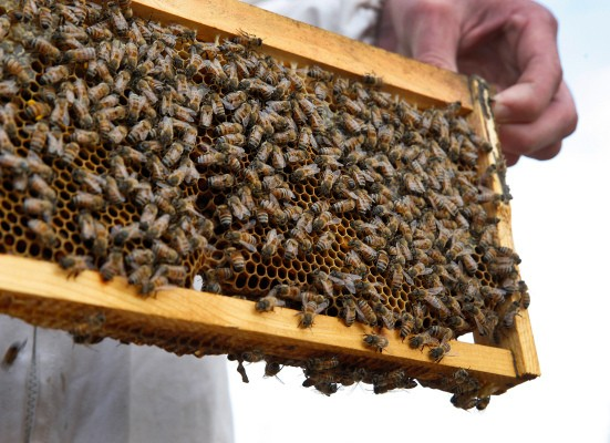 This beekeeper is rescuing bees with deep learning and an iPhone