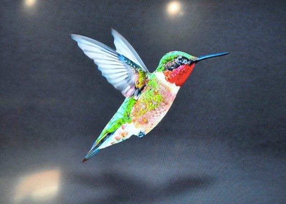 "Google Recently Made A Silent Shift To A New Search Algorithm, ""Hummingbird"""