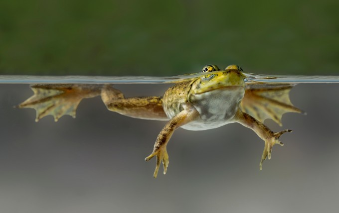JFrog acquires Shippable, adding continuous integration and delivery to its DevOps platform