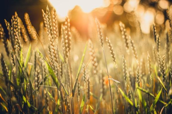 Precision farming startup Taranis gets $20M Series B for its crop monitoring tech