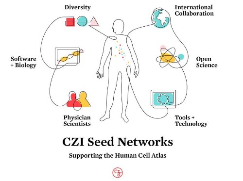 Chan-Zuckerberg Initiative gives $68M to fund Human Cell Atlas projects