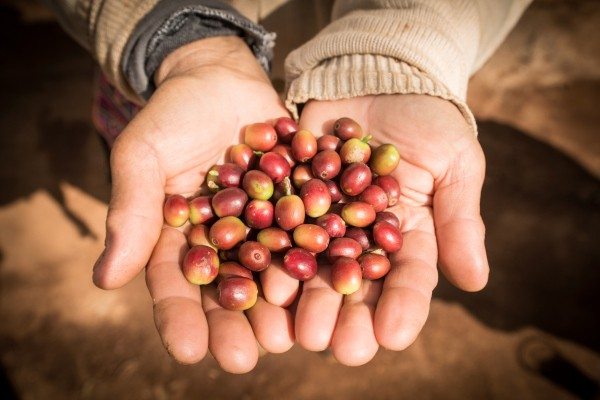 Enveritas' technology lets small growers tap into the market for sustainable coffee