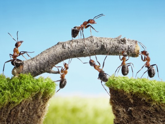 Pulled Ant Group IPO costs Alibaba nearly $60B in market cap