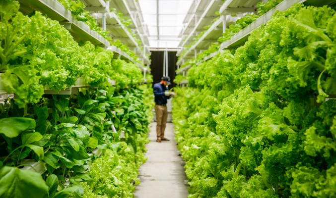 UrbanKisaan is betting on vertical farming to bring pesticide-free vegetables to consumers and fight India's water crisis
